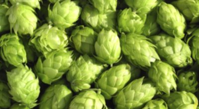 Europe's Puzzling Nobility: Hops from the Styrian Hinterland
