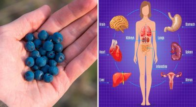 Blueberries - Your Superfood!